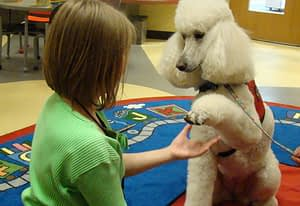"""Why """"Paw"""" is Problematic   Spring Forth Dog Academy in Providence, RI"""