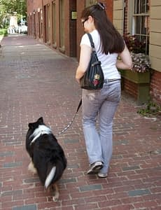 Preparing for the Canine Good Citizen (CGC) Test | Spring Forth Dog Blog