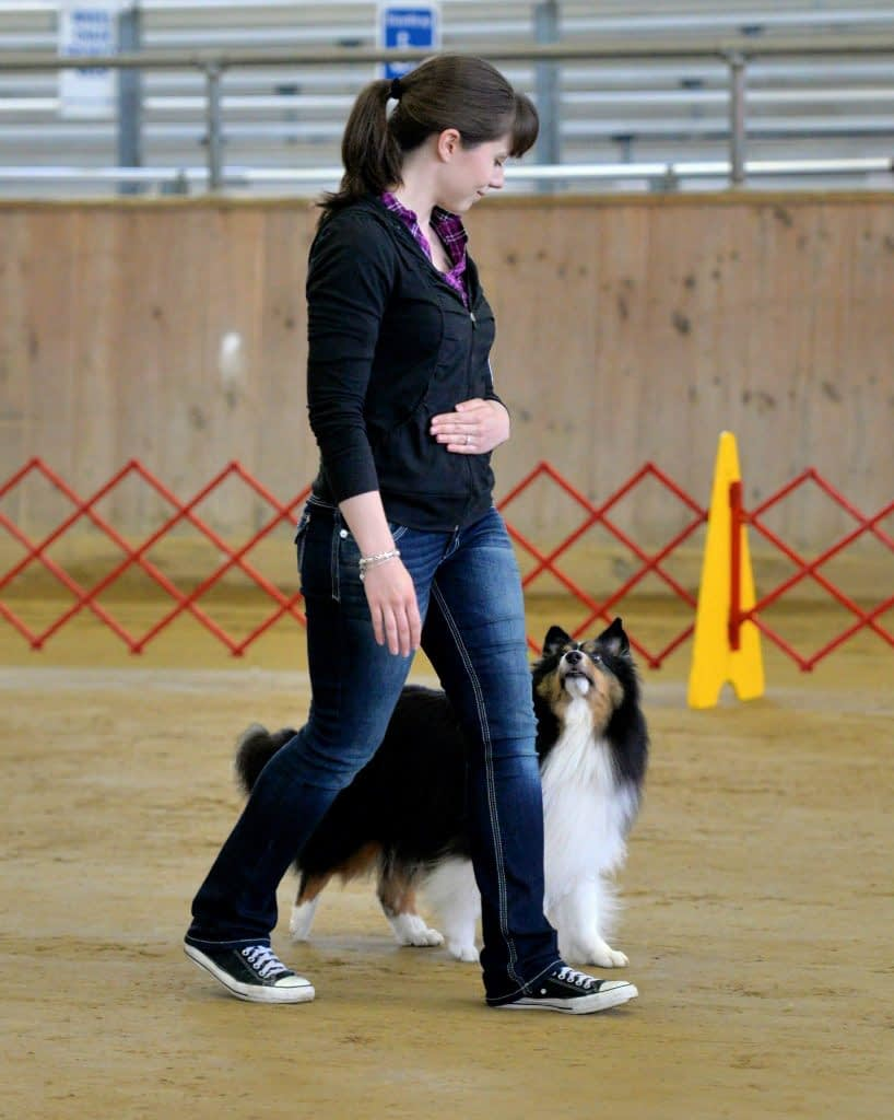 Dog Obedience Training in Providence, RI   Spring Forth Dog Academy