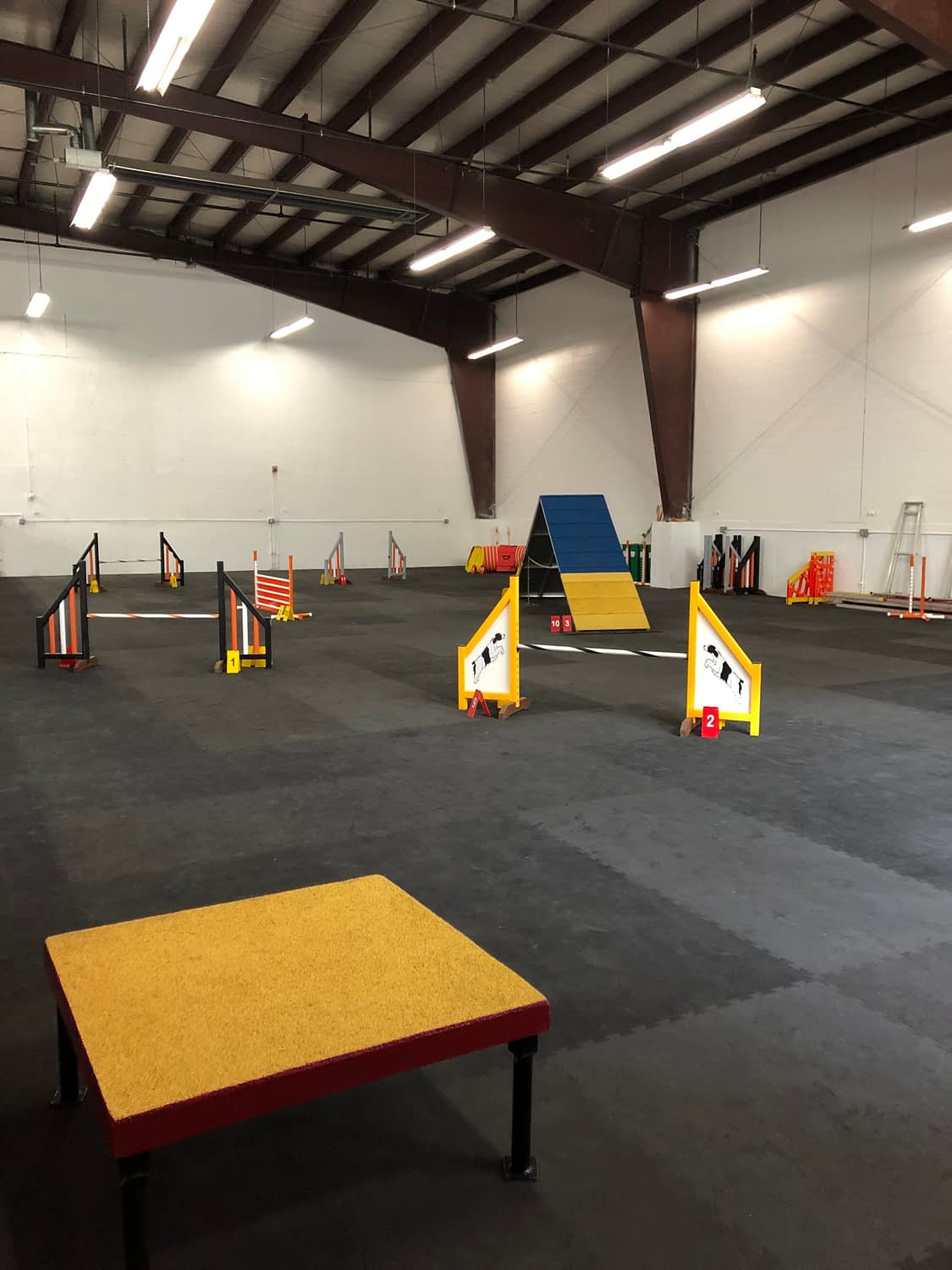 Dog Agility Training in Providence, RI | Crossbones Dog Academy