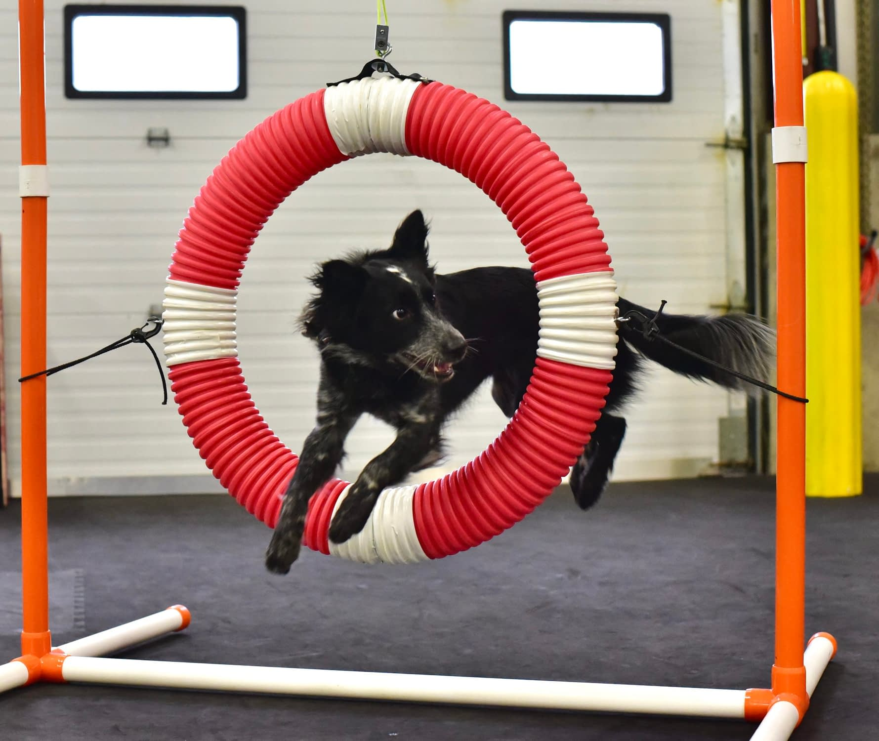 Dog Agility Classes in Providence, RI | Crossbones Dog Academy