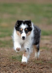 Training Your Dog to Come When Called | Spring Forth Dog Academy in Providence, RI