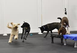 Educational Dog Daycare at Crossbones Dog Academy in Providence, RI