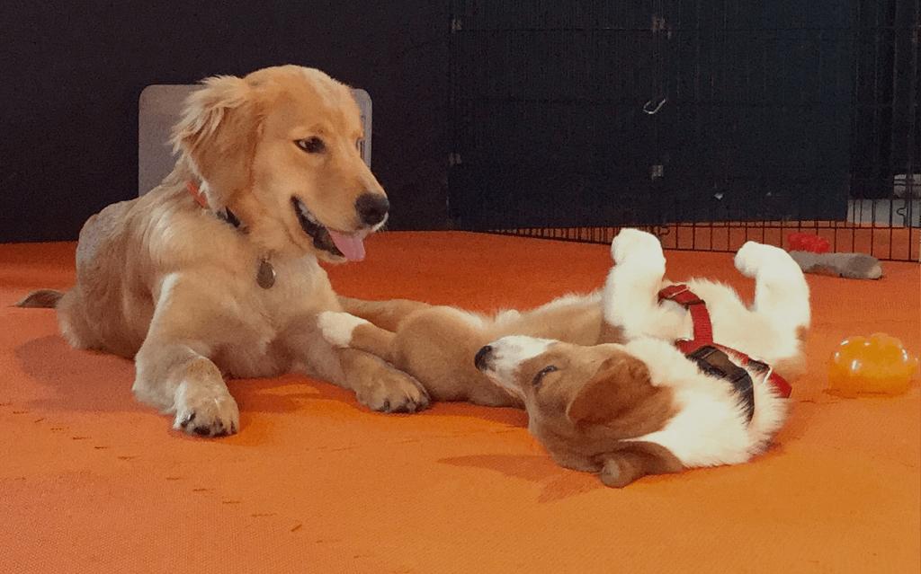 Puppy Socialization in Providence, RI