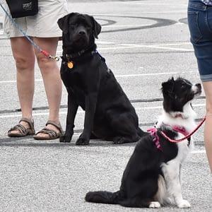 Reactive Dog Seminar | Crossbones Dog Academy in Providence, RI