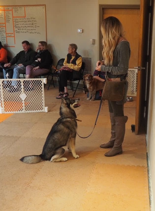 Dog Training Events and Seminars in Providence, RI
