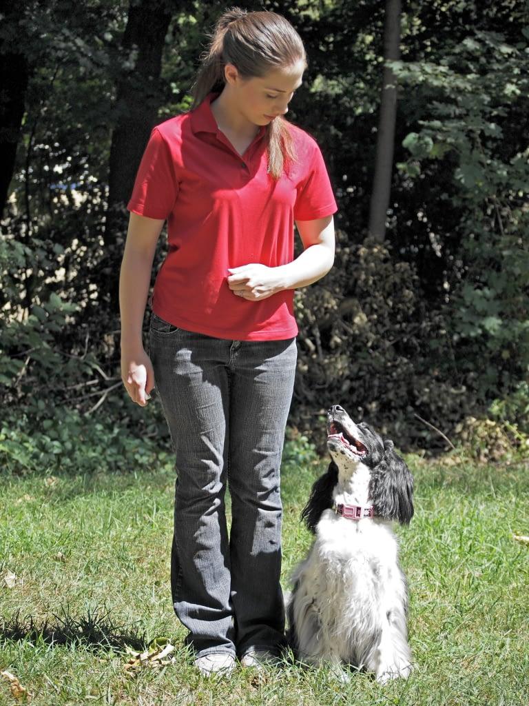 Heel - Dog Training Providence RI